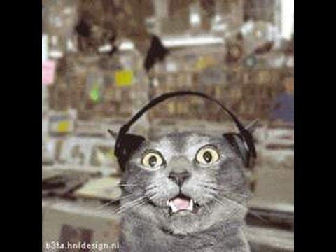 Funny Cat Videos   1 minute Watch it