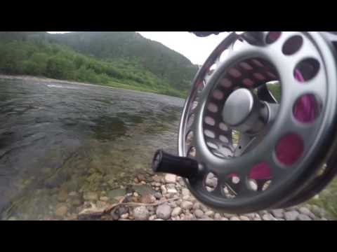 Salmon fishing on the Gaula River - This is what it's all about...