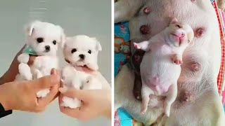 AWW CUTE BABY ANIMALS Videos Compilation cutest moment of the animals - Soo Cute! #36