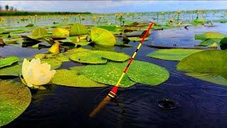 Рыбалка На Секретном Месте На Утренней Зорьке Поплавочной Удочкой