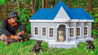 Build New Dog House For Homeless Puppies