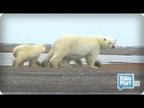 Defenders of Wildlife Uses Charity Money for Environmental Innovation⎢TakePart TV