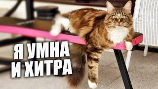 Какая сообразительная кошка