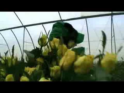 Fairtrade Kenya