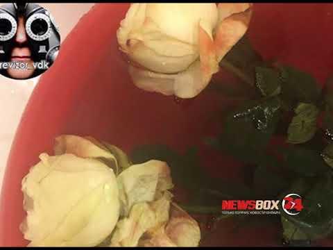 Жительнице Владивостока продали цветы однодневки с насекомыми