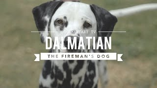 ALL ABOUT DALMATIANS: THE FIREHOUSE DOG