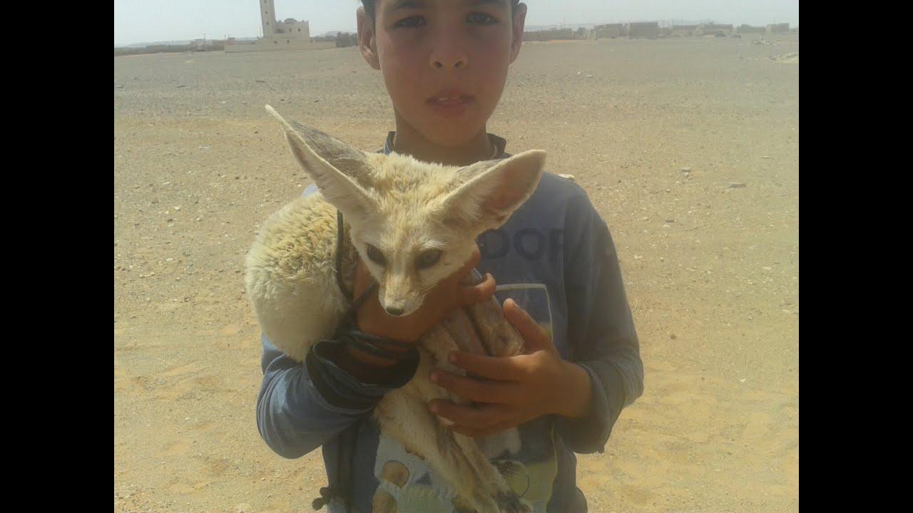 Fotos de zorros del desierto
