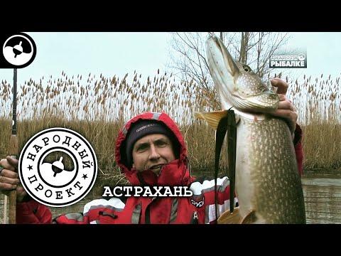 Крупная щука в мелких ериках. Рыбалка в Астрахани | Народный проект