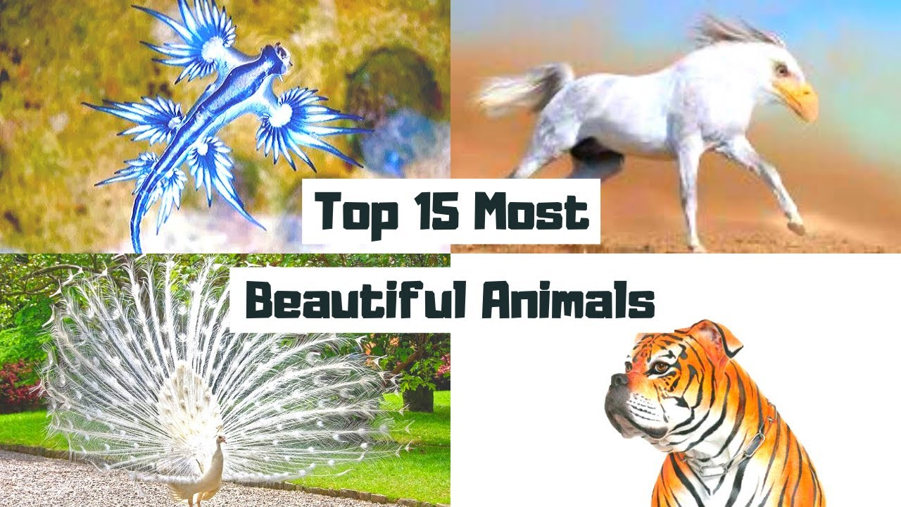 Top 15 Most Beautiful Animals