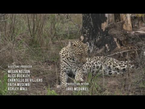 safariLIVE - Sunrise Safari - Nov. 12, 2017