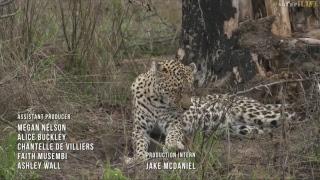 safariLIVE - Sunrise Safari - Nov. 12, 2017 thumbnail