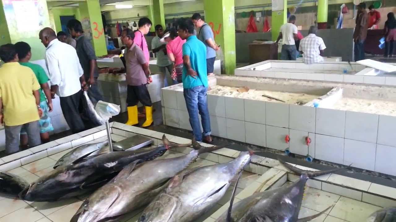 Maldives male city fish market fruit and vegetables for City fish market