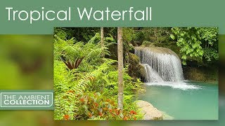 Relaxing Tropical Waterfall Dvd With Jungle Nature Sounds