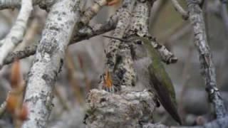 Also sprach Zarathustra (ツァラトゥストラはかく語りき) & Hummingbird babies 2