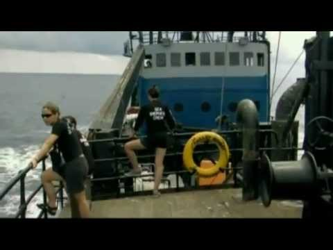The real reason for Captain Paul Watson's arrest and potential extradition to Costa Rica
