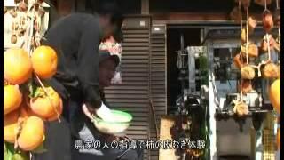 Fuyu Japanese Persimmon  kurutma8