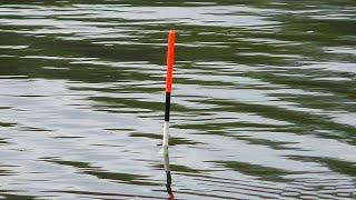ТАКОГО ОТ РЫБЫ Я НЕ ОЖИДАЛ Рыбалка на Диком Водоёме