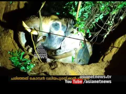 Elephant Dies After Falling Into Well In Thrissur Kunnamkulam