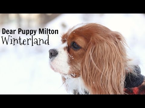 Dear Puppy Milton: Winterland   Herky & Milton   Dog explains what is winter