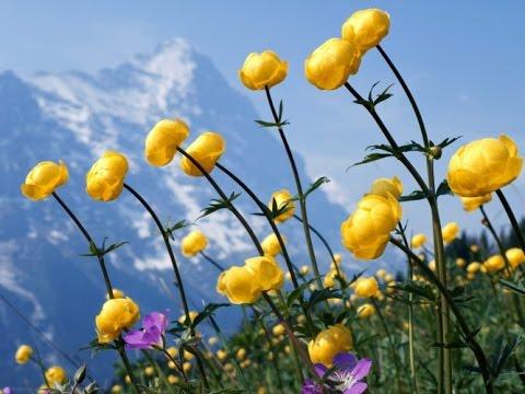 Где растут полевые цветы картинки