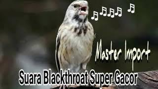 Gambar cover Gacor Owor2, Masteran Blackthroat Untuk Branjangan Dan Murai Batu