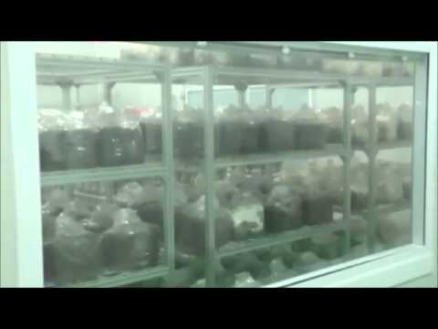 Mushroom Growing Facility in Beijing