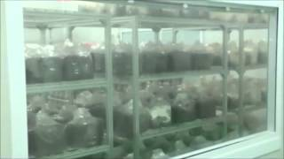 Mushroom Growing Facility in Beijing