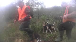 chasse au sanglier caméra sur piqueux