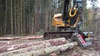 Tigercat Harvester cutting nice spruce.