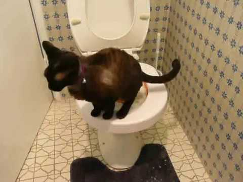 Toilet Training My Cat With The Litter Kwitter Stage 2