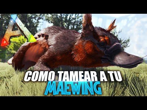 Download COMO TAMEAR A TU MAEWING | Guia Español | Ark: Survival Evolved