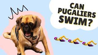 CAN PUGALIERS SWIM? || Pug x Cavalier