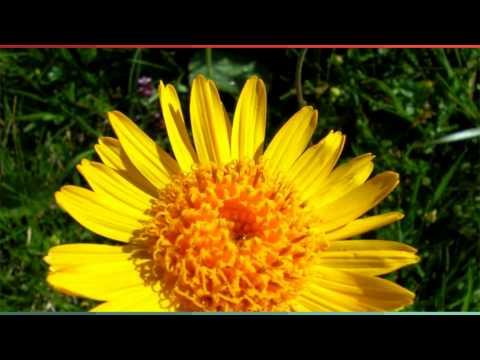 Желчный гриб горчак: фото и описание, можно ли есть