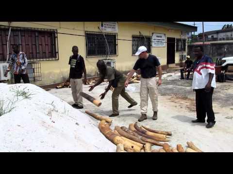 Gabon Ivory Audit | WWF