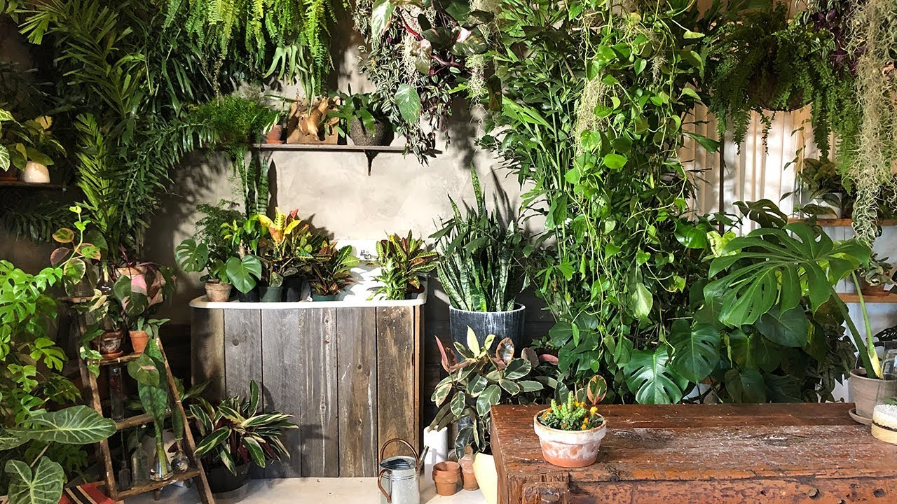 Houseplant tour of the workshop plant styling with easy - Interior plant maintenance contract ...