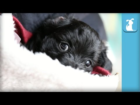 Baby Puppy In A Stocking is The Best - Puppy Love