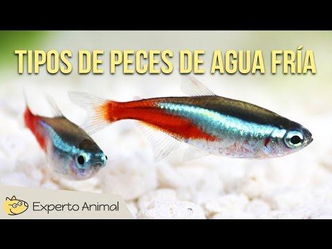 Top 10 peces mas bonitos de agua dulce doovi for Los mejores peces de agua fria