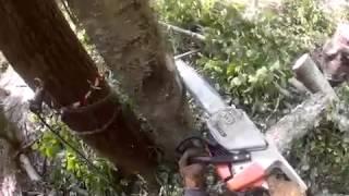 видео Удаление деревьев на участке в Москве