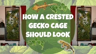 HOW TO: Set Up A Crested Gecko Enclosure