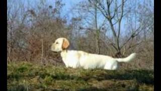 Labrador-retriever Sem Ruma 022