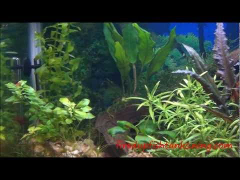 how to grow freshwater copepods