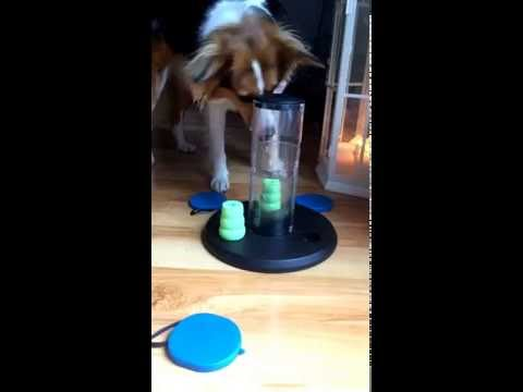 Kaya and her new Trixie Dog Activity Gambling Tower
