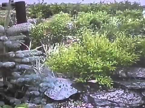 Cмотреть видео Альпийская горка в саду