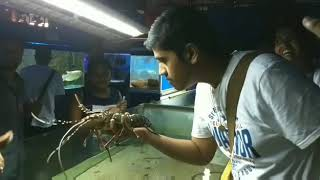 Holding a live lobster in Goa