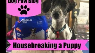Housebreaking a Puppy