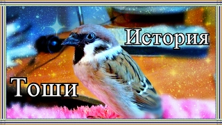 История появления моих птиц.Часть 2.Воробей Тоша.