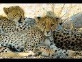 Wildlife - Etosha Nationalpark, Namibia