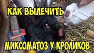 Лечим кролика от максиматоза!!! 🐰🐰🐰