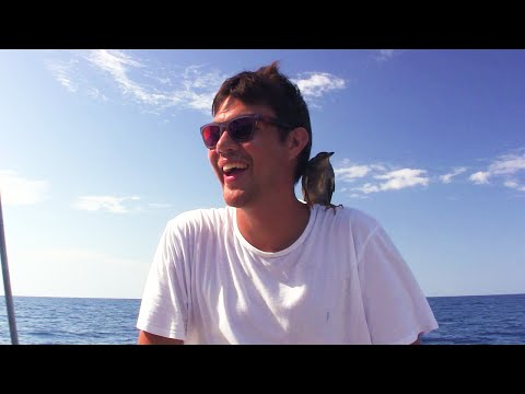 Scuba Diving In The Middle Of The Open Ocean!- Sailing SV Delos Ep. 47