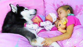 صوفيا وروتين الصباح مع الدمى والكلب